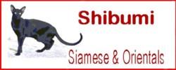 Shibumi Oriental Cats, HCM